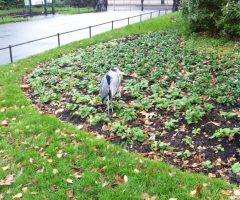Regent Park 16